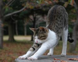 ホンモノの猫のポーズ